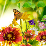 Butterfly and flowers Royalty Free Stock Images