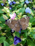 Butterfly. And flowers in the garden Royalty Free Stock Photos