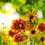 Butterfly and flowers in the garden against the sun closeup Royalty Free Stock Photos