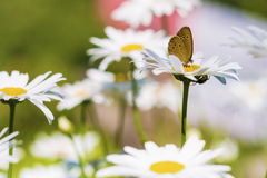 Butterfly in a flowers garden Stock Images