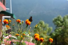 Butterfly on flowers of hills stock images