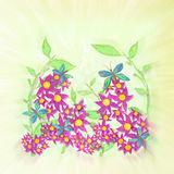 Butterfly and Flowers illustration. Stock Photography