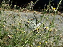 Butterfly with flowers. Butterfly life in the morning Royalty Free Stock Images