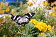 Butterfly in flowers Royalty Free Stock Photos