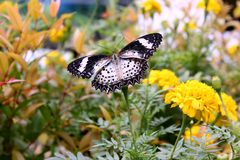 Butterfly in flowers Royalty Free Stock Photo