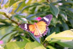 Butterfly in flowers Stock Photography
