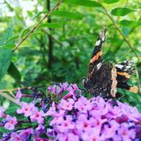 Butterfly and flowers Stock Photos