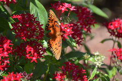 Butterfly On Flowers Royalty Free Stock Photos