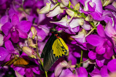 Butterfly with flowers. A butterfly with orchid flowers Royalty Free Stock Photo