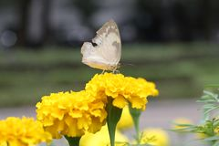 Butterfly and flowers painting our life colorful stock image