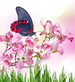 Butterfly and flowers Stock Photography