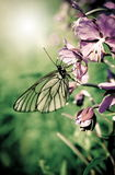 Butterfly on a flowers of plant Royalty Free Stock Photos