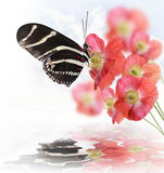 Butterfly And Flowers Royalty Free Stock Photography