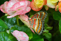 Butterfly and flowers Stock Photo