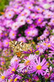 Butterfly and flowers 3 Royalty Free Stock Images