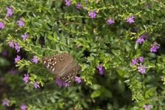 Butterfly flowers Royalty Free Stock Images