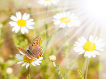 Butterfly and Flowers in Spring Stock Image