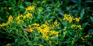 Butterfly in flowers stock photo