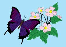 Butterfly and flowers. vector Stock Photography