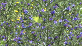 Butterfly and flowers stock footage