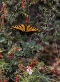 Butterfly among flowers. Yellow-black butterfly among flowers in the garden, feeding with pollen Stock Photo
