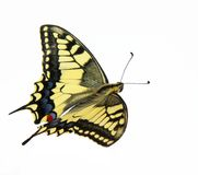 Butterfly fly Stock Images
