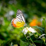 Butterfly fly in morning Stock Photos