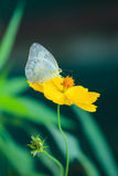 Butterfly fly in morning nature Stock Image