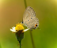 Butterfly. Fly in morning nature Royalty Free Stock Photography