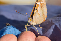 Butterfly and fly Stock Images