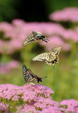 Butterfly flying Stock Images