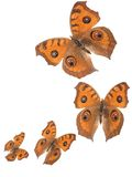 Butterfly flying background royalty free stock image