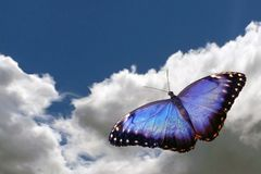 Butterfly flying to sky. Butterfly flying on background sky and cloud royalty free stock photography