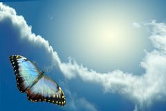 Butterfly flying to sky. Butterfly flying on background sky and cloud stock photos
