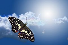 Butterfly flying to sky. Butterfly flying on background sky and cloud stock photo