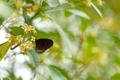 Butterfly flying on the flower nature in the rays of sunlight in summer in the spring