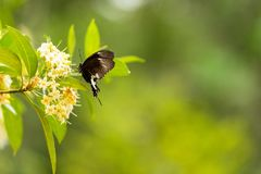 Butterfly flying on the flower nature in the rays of sunlight in summer in the spring close-up of a macro,