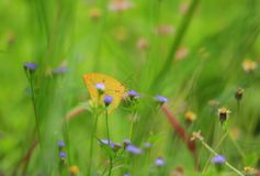 Butterfly flower green nature environment royalty free stock photography