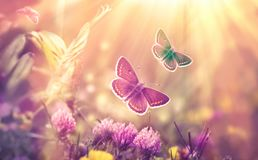 Butterfly flying in a meadow of clover - beautiful nature, beauty in nature. Butterfly flying in a meadow of clover - over clover flowers beautiful nature Royalty Free Stock Images