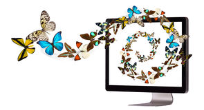 Butterfly flying out from computer Stock Image