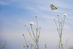 Butterfly flying over flower Royalty Free Stock Photos
