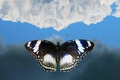 Butterfly flying to sky. Butterfly flying on background sky and cloud royalty free stock image