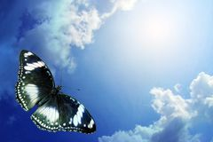 Butterfly flying to sky. Butterfly flying on background sky and cloud royalty free stock photos