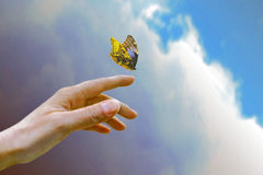 Butterfly , flying to sky. On liberty stock image