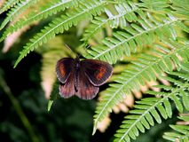 Butterfly on foliage Stock Photo