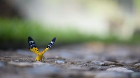 Butterfly in the forest stock video footage