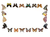 Butterfly frame Royalty Free Stock Photos