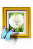 Butterfly and frame Stock Photos