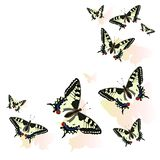 Butterfly frame isolated on white background. Machaon Vector illustration stock illustration