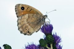 Butterfly (France) Royalty Free Stock Photography